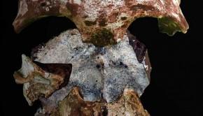 skull-zoom